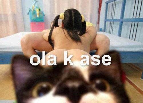 El gatito jode-mamadas