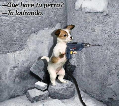 El perrito manitas