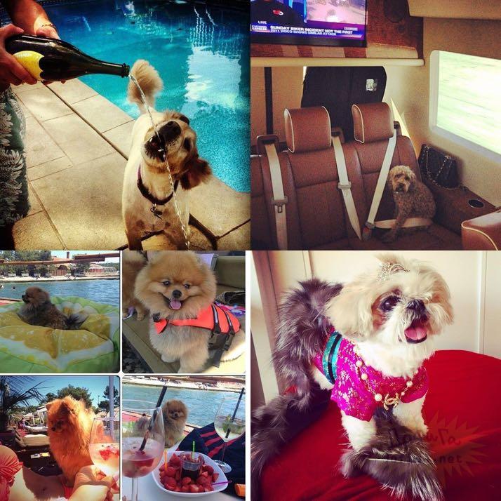 rich-dogs-of-Instagram01