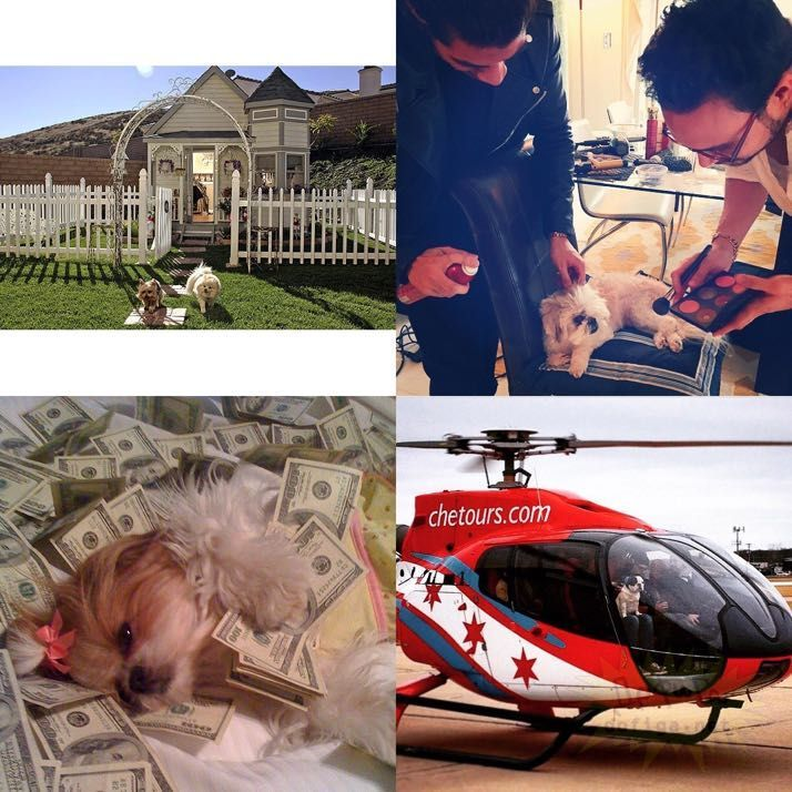 rich-dogs-of-Instagram02