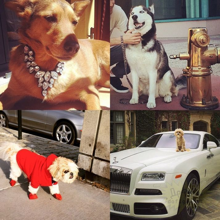rich-dogs-of-Instagram05