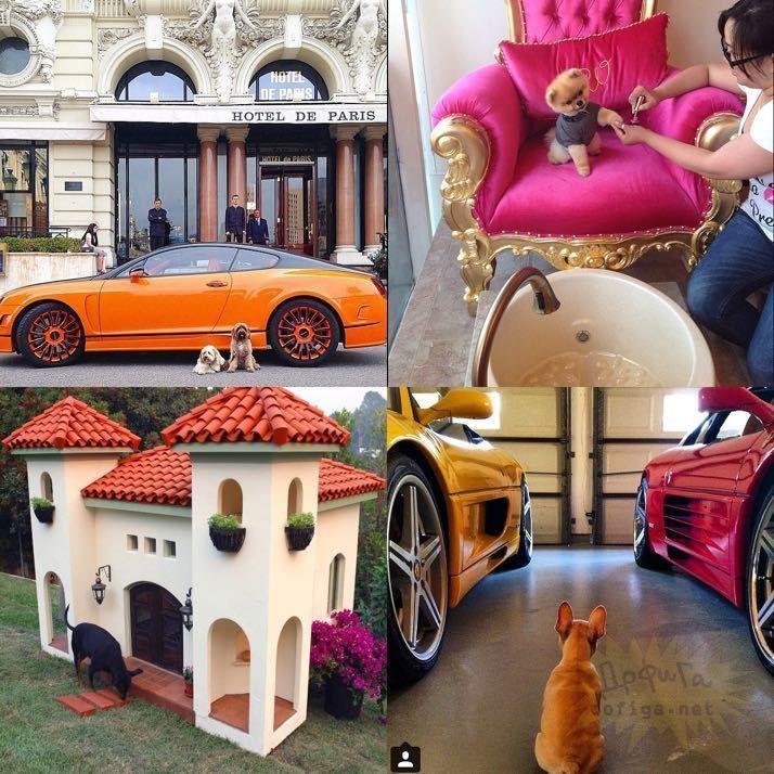 rich-dogs-of-Instagram06