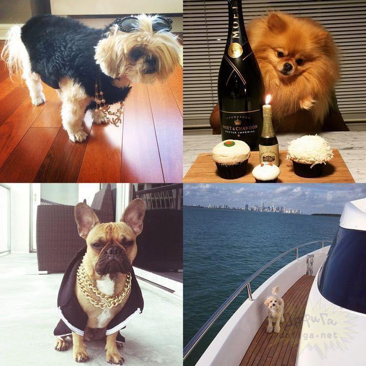 rich-dogs-of-Instagram07