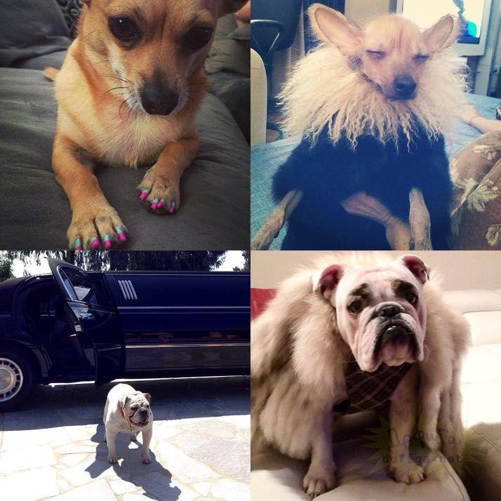 rich-dogs-of-Instagram08