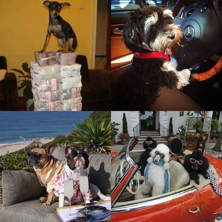 rich-dogs-of-Instagram09