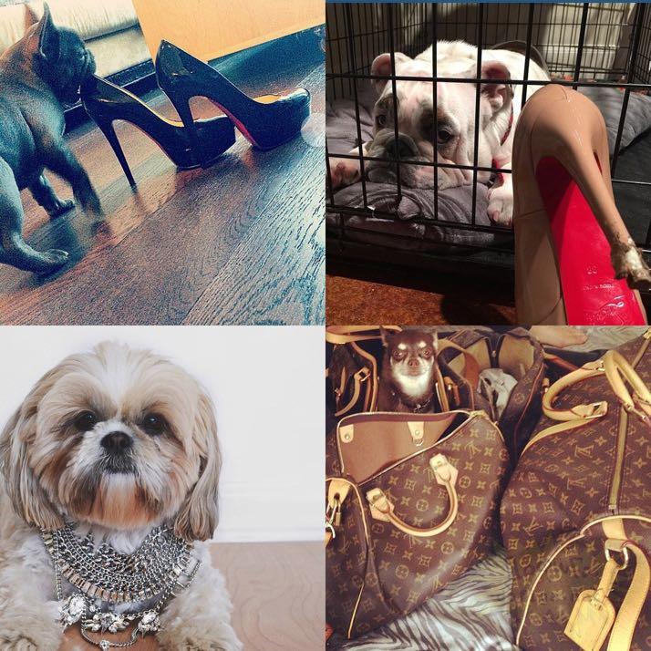 rich-dogs-of-Instagram10
