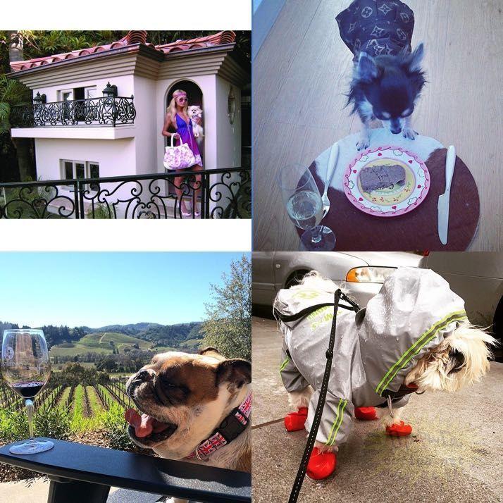 rich-dogs-of-Instagram11