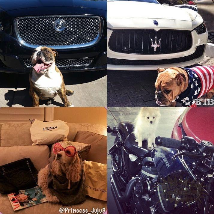 rich-dogs-of-Instagram12