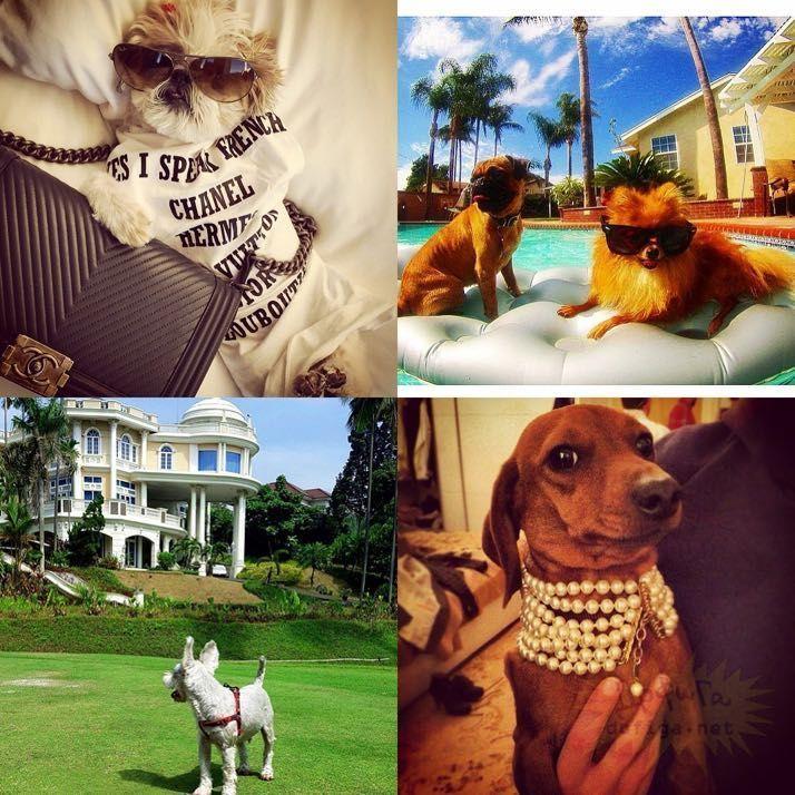 rich-dogs-of-Instagram13