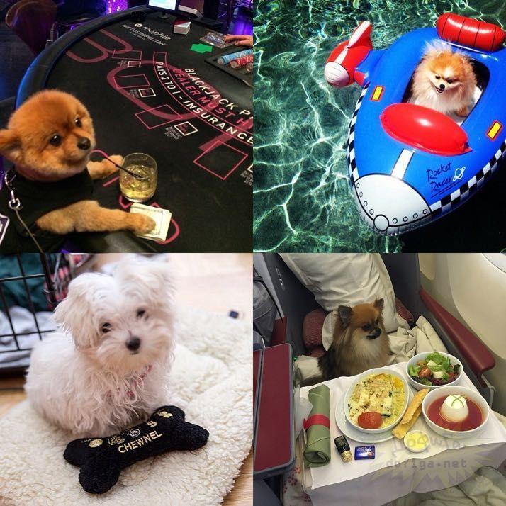 rich-dogs-of-Instagram14