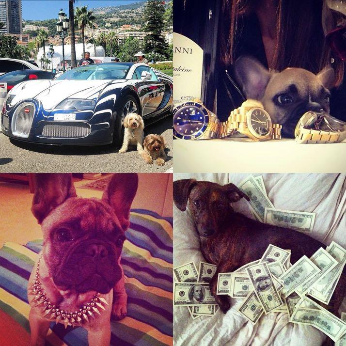 rich-dogs-of-Instagram15