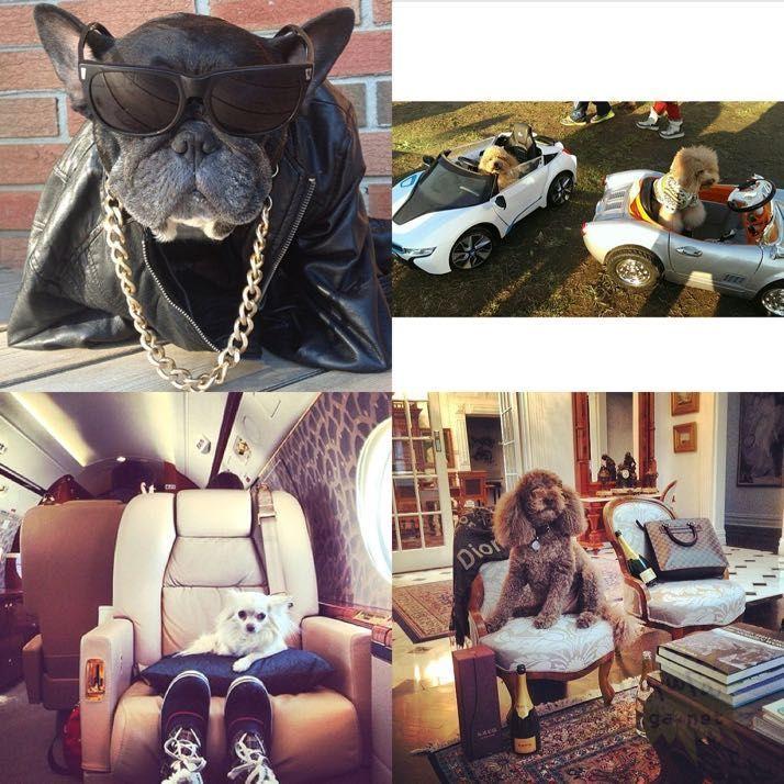 rich-dogs-of-Instagram16
