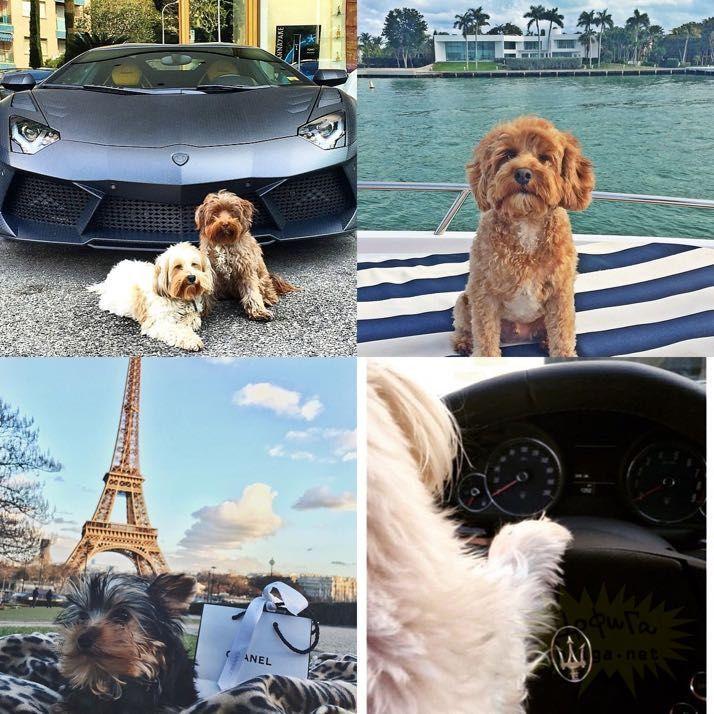 rich-dogs-of-Instagram17