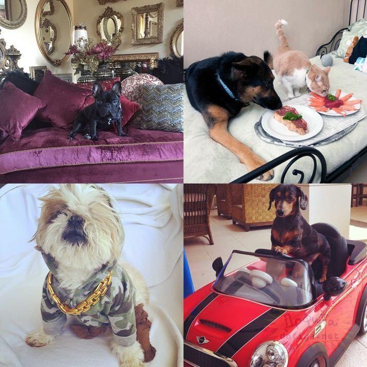 rich-dogs-of-Instagram18