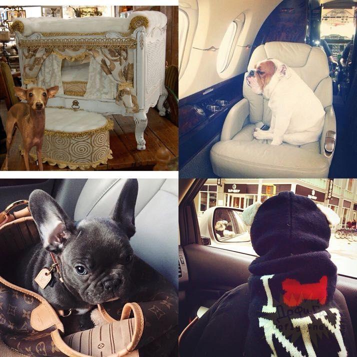 rich-dogs-of-Instagram19