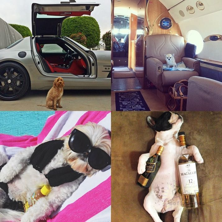 rich-dogs-of-Instagram20