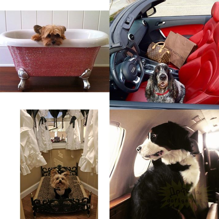 rich-dogs-of-Instagram21