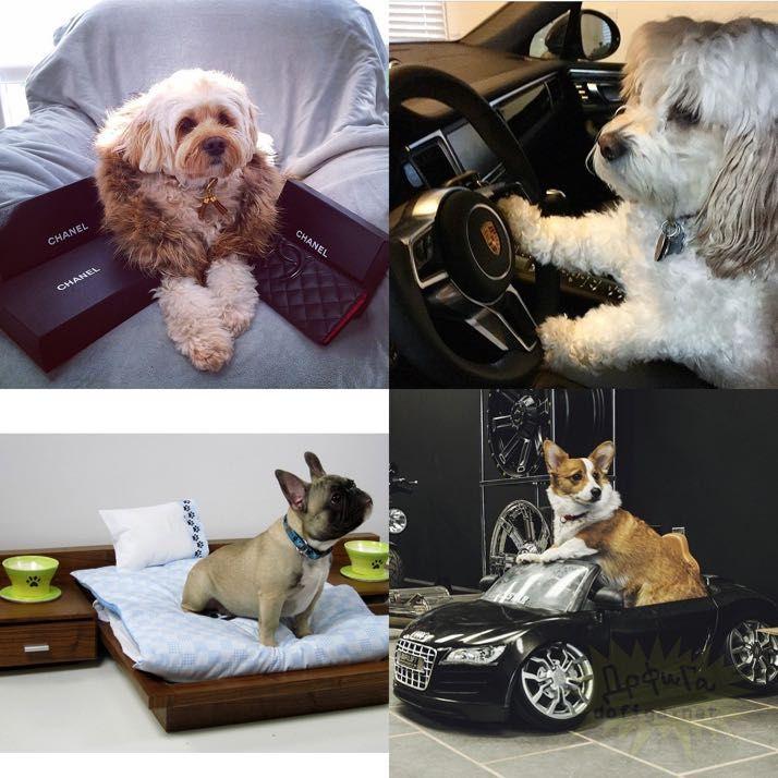 rich-dogs-of-Instagram22