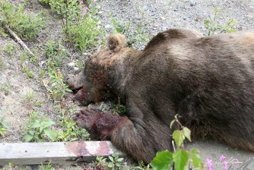 big_fucking_bear_02