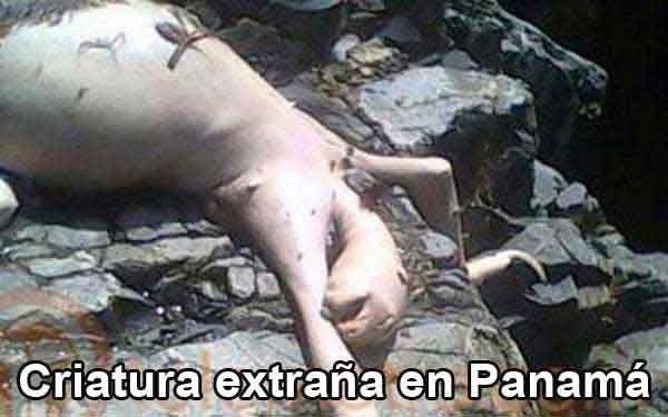Jovenes encuentran criatura extraña en Panamá