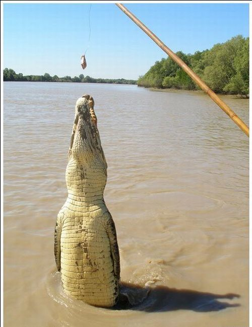 crocodiles_02
