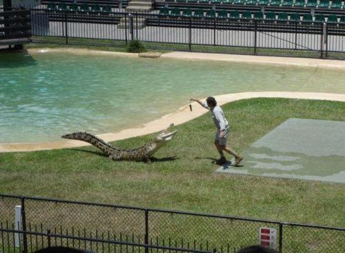 crocodiles_11