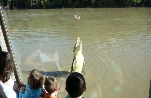 crocodiles_27