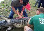 Un cocodrilo le come el brazo