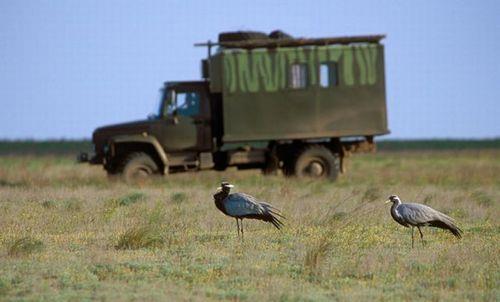 Cranes and Igor's truck