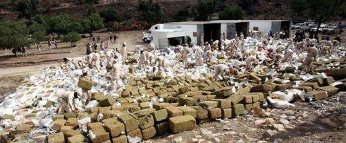 Como hacer desaparecer 124 toneladas de Marihuana