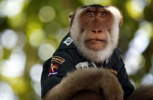 monkey_police_01