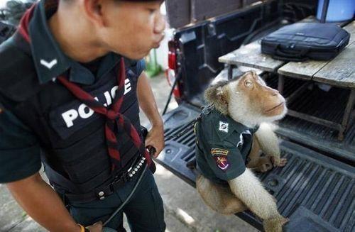 monkey_police_02