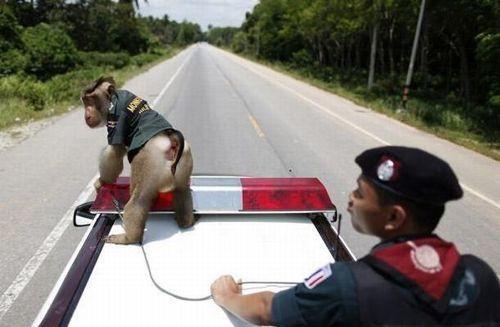 monkey_police_03