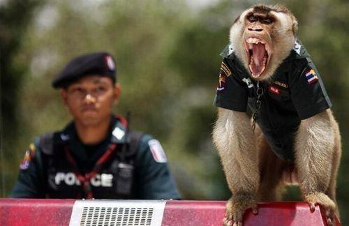 monkey_police_04