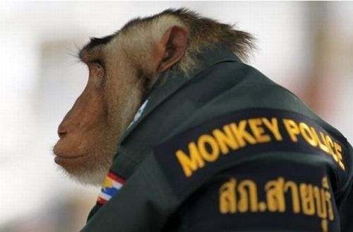 monkey_police_05