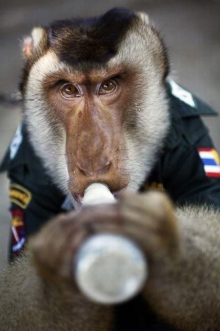 monkey_police_06