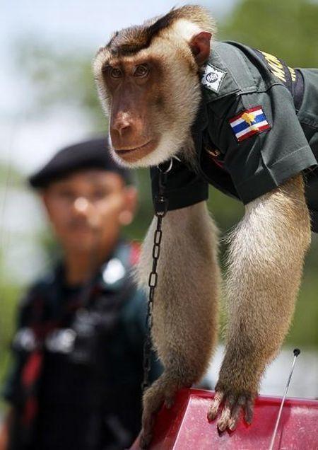 monkey_police_07