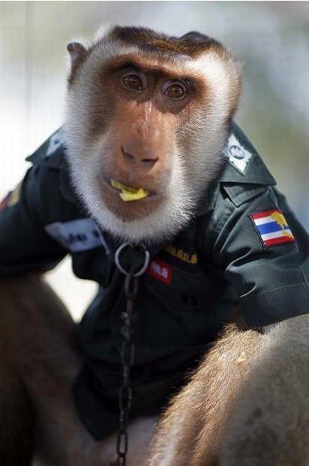 monkey_police_08