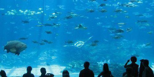El acuario más grande del mundo