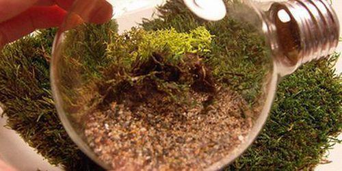 Pequeño terrario en una bombilla