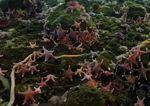 Enjambre de Gusanos y Estrellas de mar