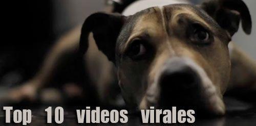 Top 10 videos virales del 2010